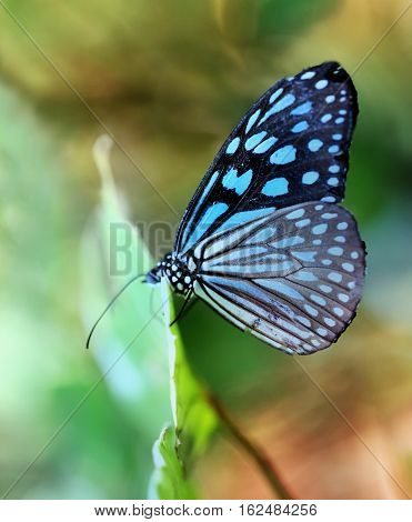 Macro photo of a beautiful tropical butterfly in the park