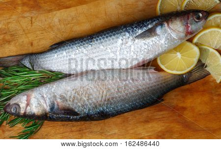 Two Raw Fresh Grey Mullet Fishes Lies On Light Wooden Table With Lemon Segments And Rosemary Branche