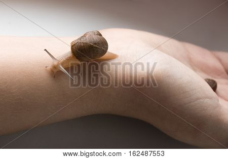 Young snail walking on a hand while baby snail sleeping