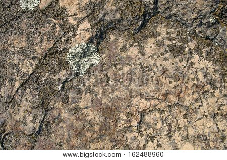 Natural stone hard rock with lichen (lichenes) background.