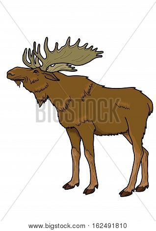 Large brown elk with branched antlers on a white background