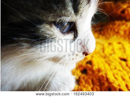 felino mascota descanso dormir naranja blanco gris poster