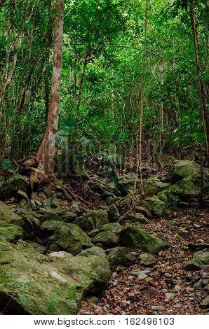 Caribbean Jungle Vertical