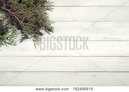 Branch of thuja on old white wooden background