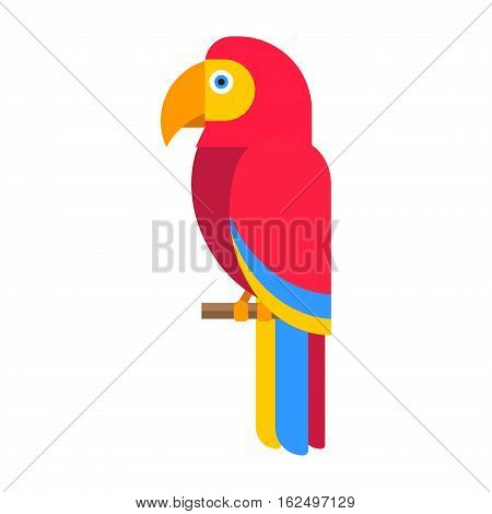 Cartoon parrot wild bird. Tropical feather zoo fauna flying ara. Exotic animal vivid bright vector illustration. Cute design fly jungle pretty wing macaw.