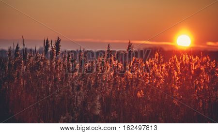 Red sunset over a field with plants in Poland.