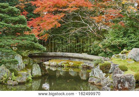 bridge over the little pond. Autumn season in the green garden