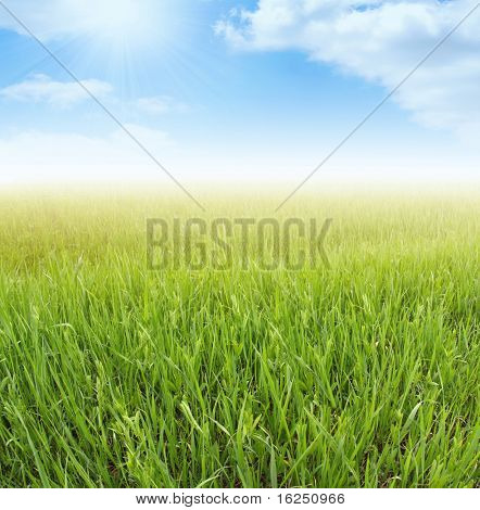spring green grass and blue sky