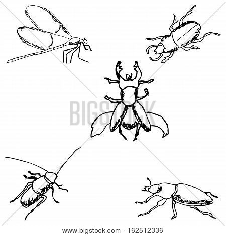 Insects. A sketch by hand. Pencil drawing. Vector image