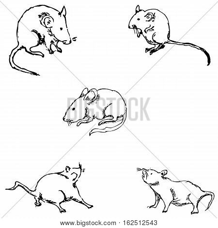 Mice. A sketch by hand. Pencil drawing. Vector image