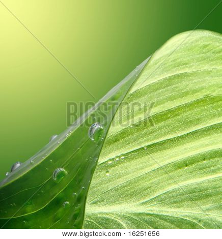 green leaf background with water drops