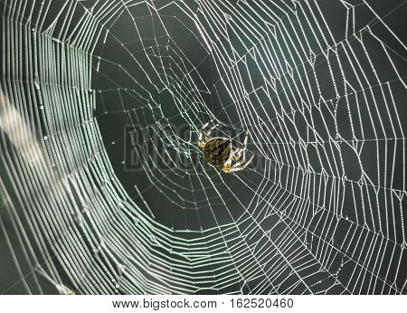 In a taiga Russia Siberia. A web with a spider