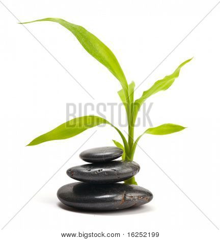 stack of stones and green leaf