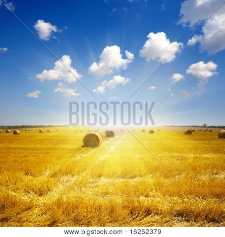 haystack on the meadow in summer