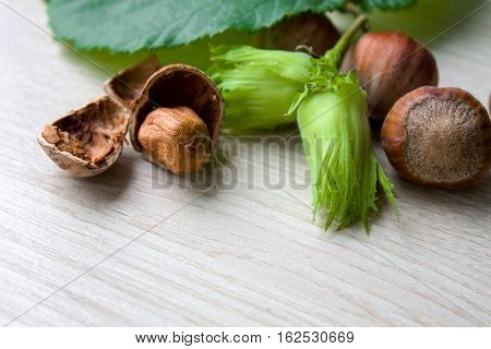 Filbert, Hazelnut Green