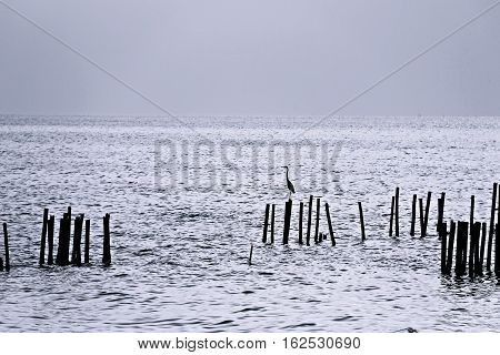 Shadow of a bird standing on the wooden pole in the sea with many poles around