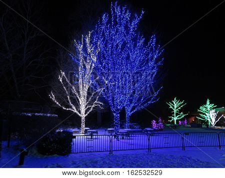 Winter lights at the Morton Arboretum in Lisle, Illinois