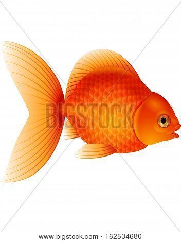 Vector illustration of Cartoon goldfish isolated on white background