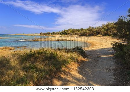 Summer seascape: Torre Guaceto Nature Reserve .BRINDISI (Apulia)-ITALY-Mediterranean maquis: natural path with path along the cliff in the shade of tamarisks connecting sandy coves.