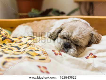 small dog is sleeping on bed in bedroom
