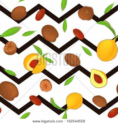 Vector seamless pattern Nutmeg spice fruit. Striped zig-zag background with Nutmeg nuts fruit in the shell, whole, shelled, leaves appetizing looking for design of healthy food, printing on fabric