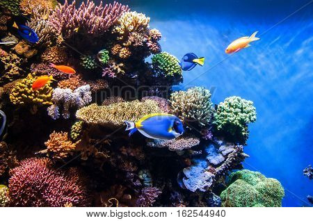 Tropical fishes on the coral reef - underwater backgroud