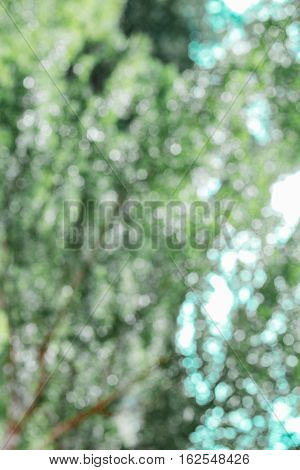 Abstract soft blurred tree green bokeh background in the forest. Nature bokeh background. Beautiful view select blurred all background