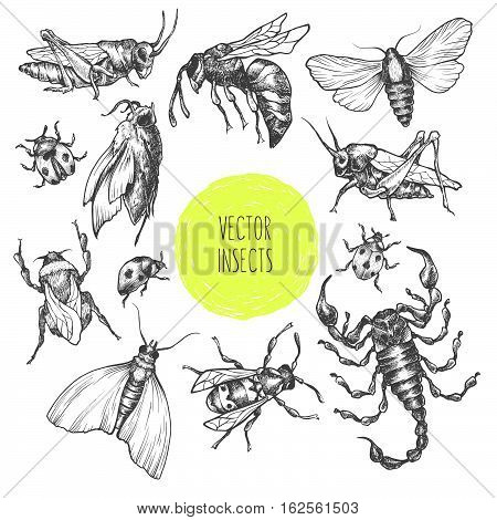 Set Of Hand Drawn Vector Insects In Different Poses.