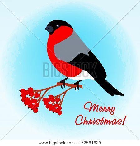 Bullfinch on branch of Rowan. Illustration for postcard. Christmas background.