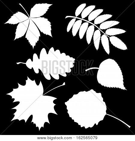 Vector illustration the Set of silhouette leaves.