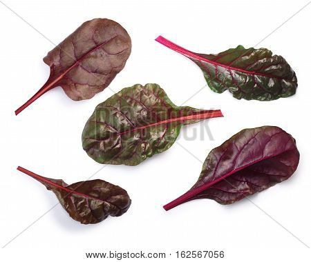 Chard (silverbeet, Mangold) Leaves, Top View, Paths