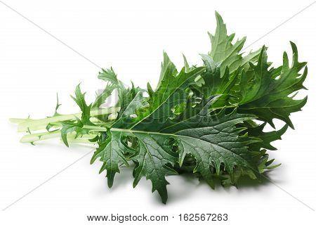 Mizuna Leafy Salad (japanese Mustard), Paths