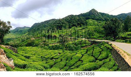 Panoramic view in Munnar in western Ghats Kerala Idukki district India