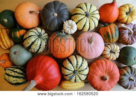 Autumn harvest colorful squashes and pumpkins in different varieties.