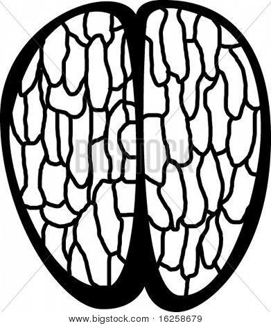 top view of an human brain