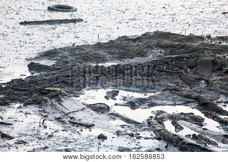 Dirty muddy beach showing a dump site