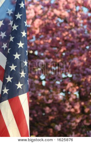 Patriotic Blossoms