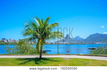 Famous bicycle and running track, green palm tree and Rodrigo de Freitas Lagoon, the most emblematic point of the neighborhood Lagoa, Rio de Janeiro, Brazil