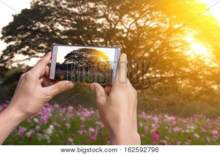 Technology makes taking pictures easier with a camera phone. The camera phone can easily adjust the exposure.