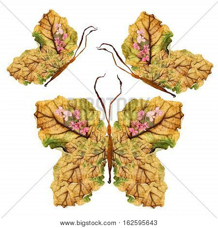 Floral Butterfly Made Of Dry Leaves And  Flowers