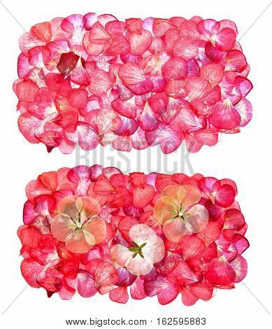 Dry  Flowers And Petals Of Pelargonium, Isolated Border