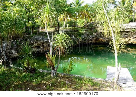 Clear waters in little cenote in Yucatan. Mexico