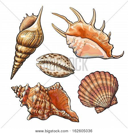 Set of various beautiful mollusk sea shells, sketch style illustration isolated on white background. Realistic hand drawing of seashells like conch, kauri, oyster, spiral, clam and mollusk shells poster