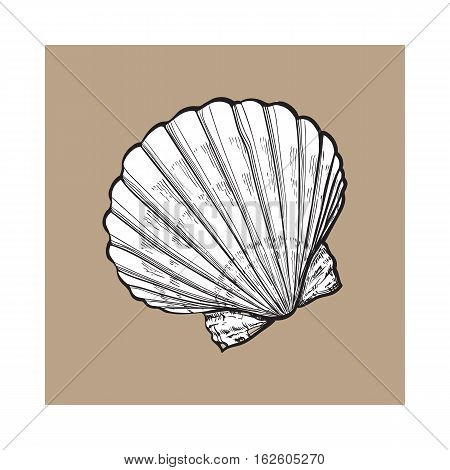 white scallop sea shell, sketch style vector illustration isolated on brown background. Realistic hand drawing of saltwater scallop seashell, clam, conch
