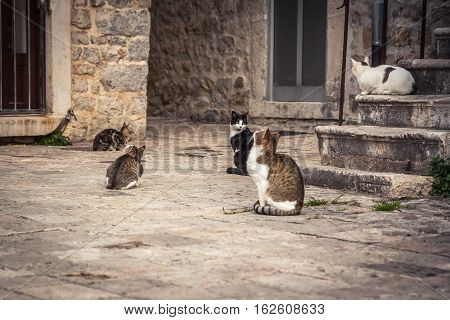 Playful cats waiting for food in old Europe city street in vintage style