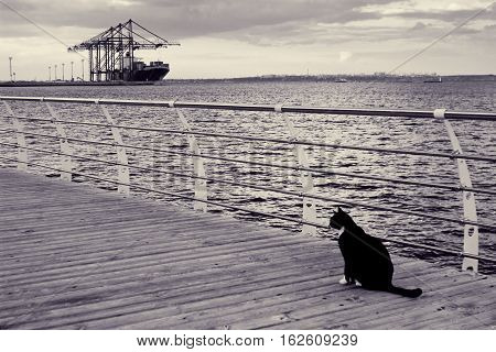 Black cat and ship. Lonely kitten sits on pier near sea. Evening sea landscape with tanker at port on horizon. Lonely street animal. Toned black and white color processing. Nice soft warm light
