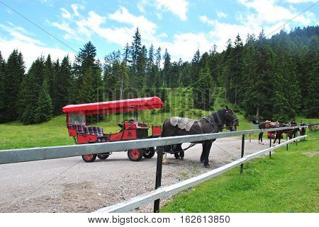 A row of horse-drawn carts in the Austrian countryside
