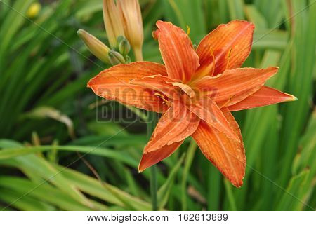 a bright blooming english summery orange flower