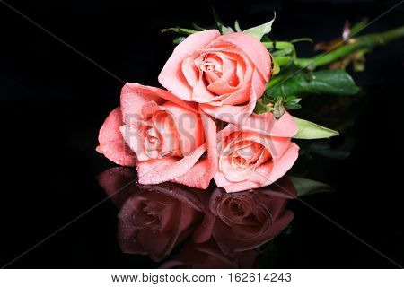 Roses on a black background with reflection. Pink roses are reflected in a black brilliant surface. Black background selective focus small depth of sharpness