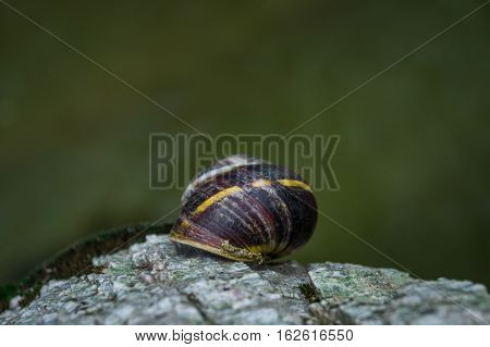 Snail.A scared snail on a rock next to a creek.